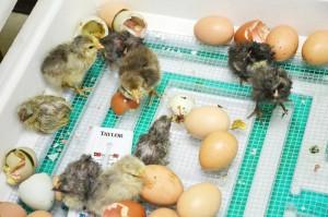 chicksBlog